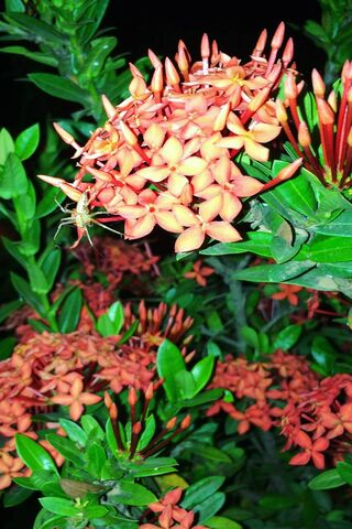 Flower Rifki Subhan