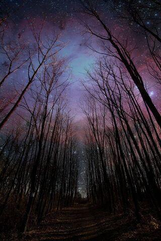 Sky Night Bright