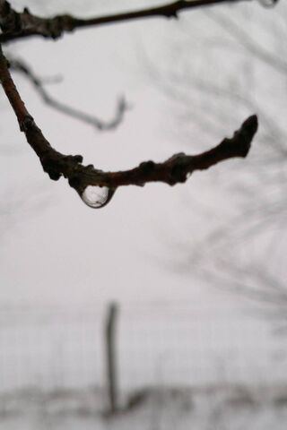 Winterdrop1