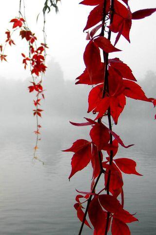 लाल पाने