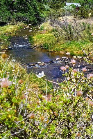 Pastoral Stream