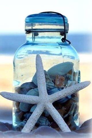Shells Sea