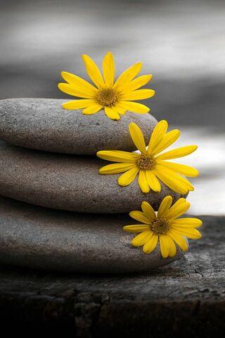 Stones-Flowers