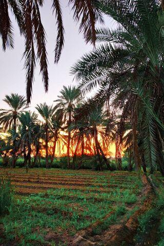 Natura i rolnictwo
