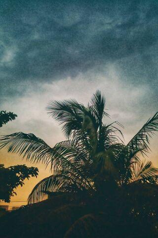 पेड़ और बादल