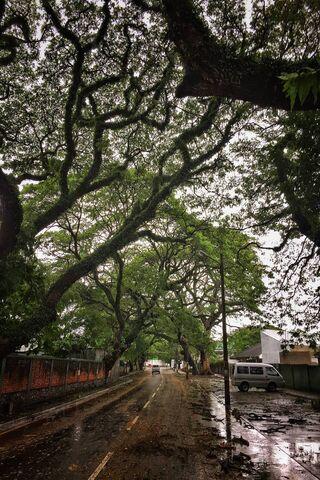 Street Of Greens