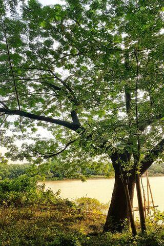Зелене дерево