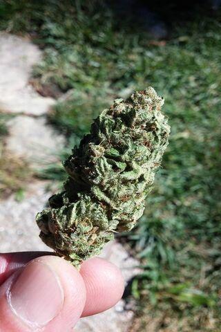 Квітка марихуани