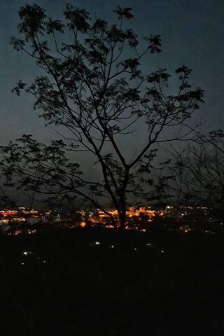 الحب الليلي