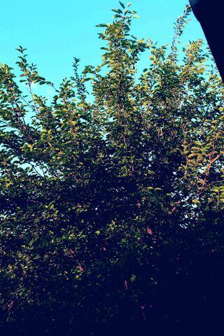 आकाशीय पेड़