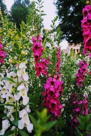 Flores de la capital
