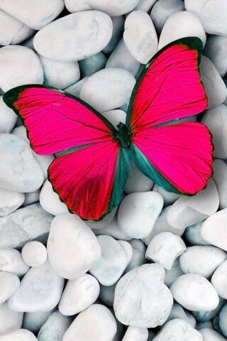 गुलाबी फुलपाखरू