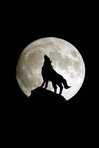 लांडगा पूर्ण चंद्र
