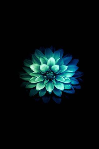 अमूर्त फूल