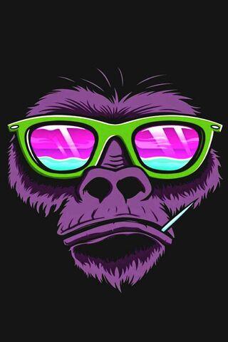 हिरवा माकड