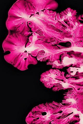 Pink Coral Ink Art