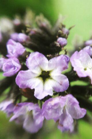 매크로 꽃