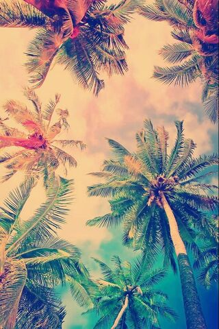 Palms Hipster