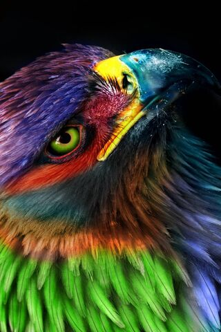 Eagle Colorful