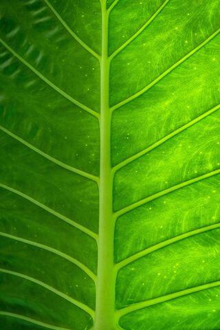 Leaf Plant Texture