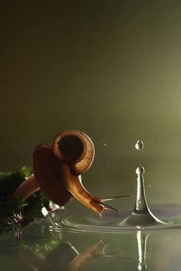 Snail Need Water