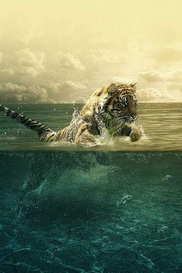 Tiger Running Sea