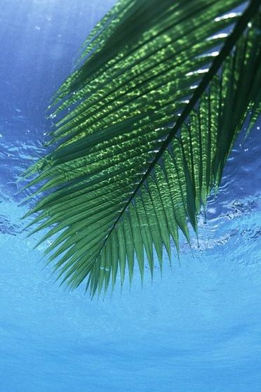 Palm Leaf Sea