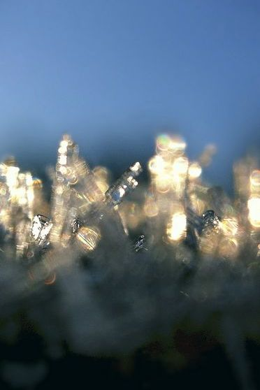 Ice Crystals In Morning
