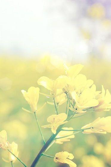 पिवळा फुले