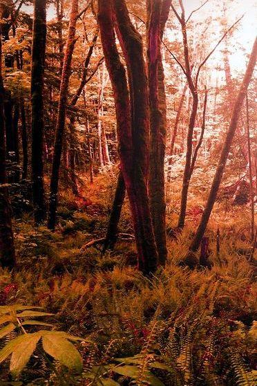 Naturalny Fall Room