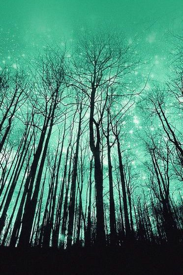 Green Starry Forest
