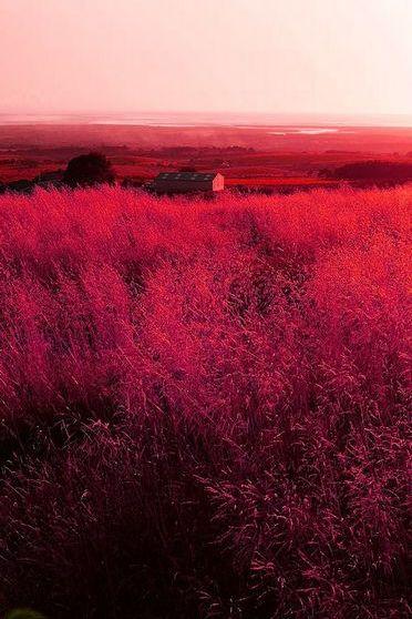 مزرعة حمراء