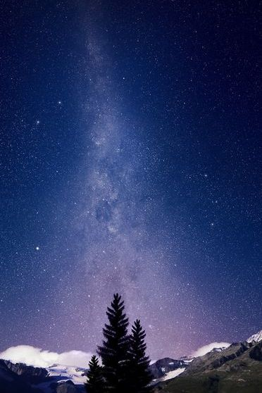 Pine Tree View