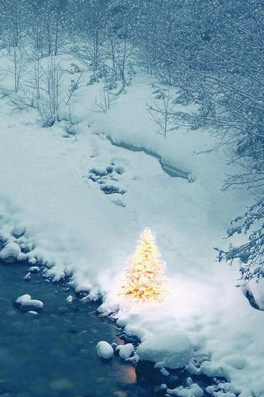 Christmas Tree In Nowhere