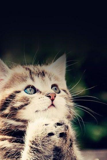 Kitten Pray