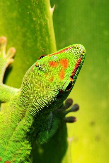 Gecko On Tropical