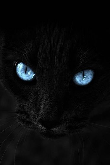 Black Cat With Blue Eyes Wallpaper Download To Your Mobile From Phoneky