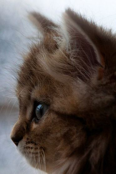 Kitten Dream