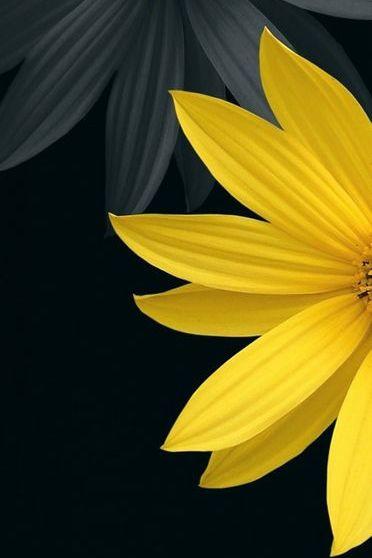 Siyah çiçek
