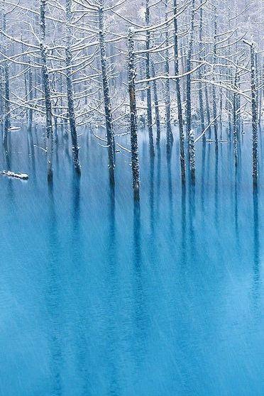 Tree Pool