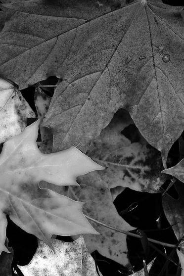 Autumn Leaves Fell
