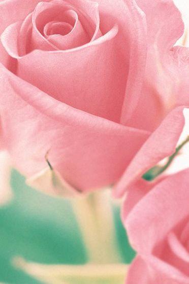 Rosas e branco