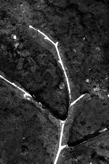 Inverno de galho de árvore escura