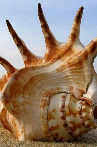 Beach Conch Shells Sea Sand Paisaje