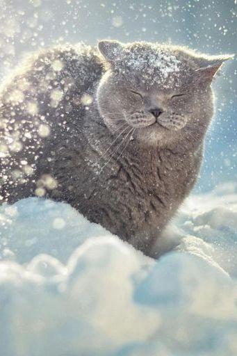 Cat Likes Snow