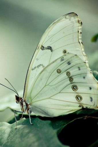 Butterfly On Green Leafs
