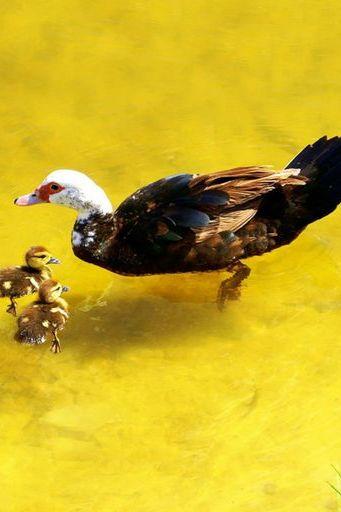Bird (01)