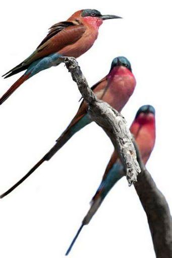 पक्षी (10)