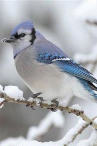 Bird (18)