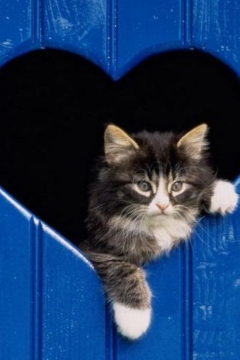Cat In Heart Shaped Window